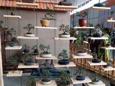 Tavolino bonsai ~ Shelf rebs g bonsai bonsai plants