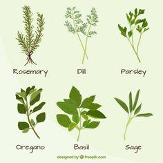 Hand drawn variety of plants set Premium Vector