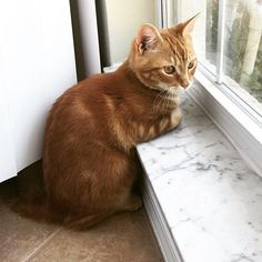 """Cat Tactics (@cattactics101) su Instagram: """"Fig = . Follow us @cattactics101 . Get more Fig @furryfig . #cattactics101"""""""