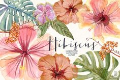 Watercolor hibiscus flower monstera - Illustrations