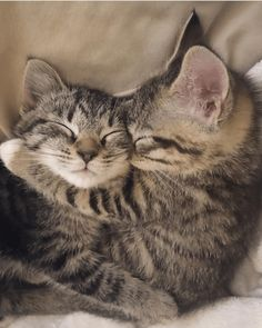 But How Can You Say 'Goodbye' to Your Foster Animals? - But How Can You Say 'Goodbye' to Your Foster Animals? Cute Baby Cats, Cute Little Animals, Cute Cats And Kittens, Kittens Cutest, Funny Kittens, Cutest Cats Ever, Kittens And Puppies, Cool Cats, Funny Dogs