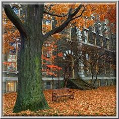 Picture Archives - Album 475 (Ithaca - Cornell campus, New York, November 9 - - Photo 07 (A hall at Arts Quad of Cornell University campus. Ithaca, New York, November Places Worth Visiting, Cornell University, Law School, Quad, Scenery, New York, Tours, Poison Ivy, Adventure