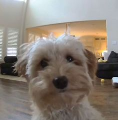 Little Dog Left Home Alone Suddenly Realizes She's Being Watched - The Dodo Little Dog Names, Little Dogs, Home Alone, Cute Gif, Suddenly, Dog Toys, Hidden Camera, Dog Training, Animals