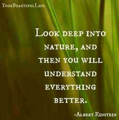 The Natural World This is absolute truth! Or it may lead to more questions, which in the end will give you some of the best solutions in life Great Quotes, Quotes To Live By, Inspirational Quotes, Awesome Quotes, Motivational, Life Quotes, E Mc2, Einstein Quotes, Nature Quotes