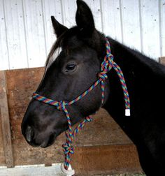 Rio has outgrown his baby halter- at 7 months old he is as big as some yearlings. I bought 50 feet of rope a while ago, enough to make a cou. Horse Camp, Horse Gear, Horse Tips, My Horse, Paracord, Puppy Chew Toys, Rope Halter, Horse Halters, Horses