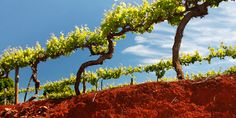 terra rosa soil in south australia - so beautiful