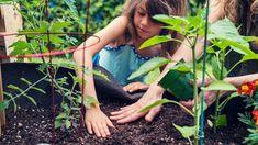 Gibt es bald einen Garten-Service von Amazon?