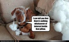 funny dog pictures - Yeah, that's not marshmallow