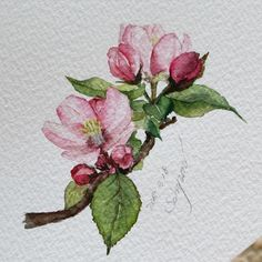 Lyn Knox's media content and analytics Easy Watercolor, Watercolor Cards, Watercolour Painting, Watercolor Flowers, Painting & Drawing, Watercolours, Botanical Illustration, Botanical Art, Watercolor Illustration