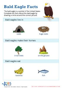 Teach your child to appreciate and cherish one of the USA's most famous symbols with this bald eagle facts printable worksheet! Educational Apps For Kids, Learning Games For Kids, Preschool Games, Preschool Curriculum, Kindergarten Worksheets, Worksheets For Kids, Preschool Kindergarten, Preschool Ideas, Kindergarten Social Studies