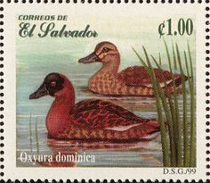 Masked Duck stamps - mainly images - gallery format