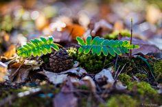 https://flic.kr/p/FuHor1 | Tavasz...én így szeretlek! | Zemplén hegység kincsei...