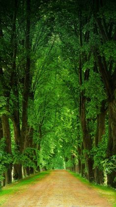 Headed that Way! Wood Path, Tree Tunnel, Amazing Nature, Nice View, That Way, The Great Outdoors, Beautiful Images, Great Places, Mother Nature