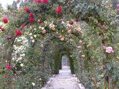 Smukke roser i generalife haven