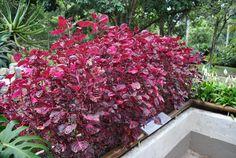 Rio de Janeiro Botanical Garden - Jardim Botânico - Rio de Janeiro - Avaliações de Jardim Botânico - TripAdvisor