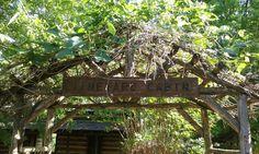 The Vineyard Cabin.