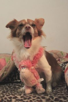 my dog with her pink monkey