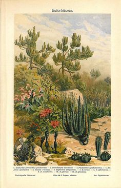 Spurge Plants Antique Color Lithograph by CarambasVintage on Etsy, $16.00