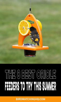 Try some of these bird feeders that are great for attracting orioles to your feeder. Species that are common include Baltimore Oriole, Bullocks, and Orchard Orioles. Oriole Bird Feeders, Best Bird Feeders, Homemade Bird Feeders, Diy Bird Feeder, Bird Suet, Squirrel Feeder, Baltimore Orioles Birds, Bird Feeding Station, Backyard Birds