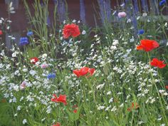 wildflower meadow by sheila phillips