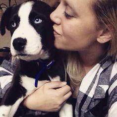 Puppy love, dog, husky, pitsky, pit bull husky mix, Pitbull, dog