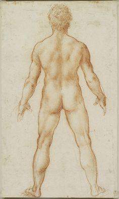 A male nude from behind, Leonardo da Vinci / 1504-6. Red Chalk.