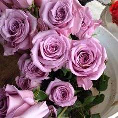 Love the colors of these roses.