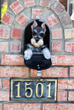 PUPPY MAIL - Dorothy Sammons Photography - Serving the Dallas-Fort Worth metroplex, surrounding Texas cities - PETS