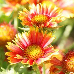 Para que llenes tu jardín de color y vida, te mostramos 20 perennes que pueden transformarlo por completo y conquistar a primera vista. Las conocemos…