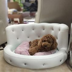 Dog Bed Princess Tactic Vip Bichon Diamond Puppy Kennels Bed Washable Leather Summer Pet Sofa Luxury white ** Visit the image link more details. (This is an affiliate link) Couch Pet Bed, Diy Dog Bed, Sofa Beds, Puppy Kennel, Puppy Beds, Puppy Room, Dog Furniture, Furniture Market, Dog Rooms