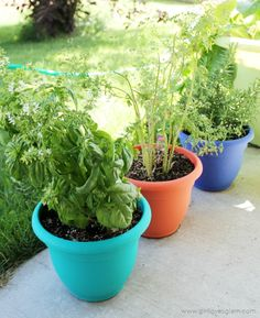 Growing Herbs at Home on www.girllovesglam.com #swissherbs #ad