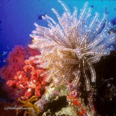 A Splash of Color on a Sipadan Reef ~ photo by B N Sullivan for TheRightBlue.com
