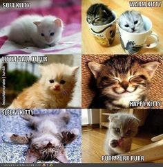 Cute Animals with Captions | Funny Animal Pictures With Captions Very Cats Cute Kitty Cat - images ...