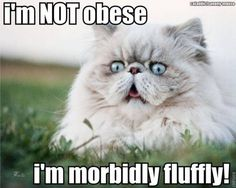 I'm NOT FAT Just Fluffy