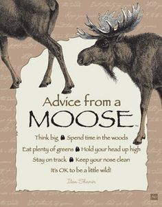 Each poster says: Advice from a Moose Think big Spend time in the woods Eat plenty of greens Hold your head up high Stay on track Keep your nose clean It's OK t Animal Spirit Guides, Spirit Animal, Moose Pictures, Moose Pics, Moose Decor, Moose Art, Moose Antlers, Bull Moose, Nose Cleaner