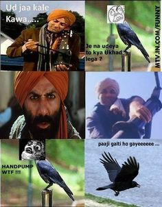 Noone trolls Sunny paaji You Funny, Funny People, Funny Shit, Hilarious, Funny Images, Funny Pictures, Bollywood Funny, Desi Humor, Indian Funny