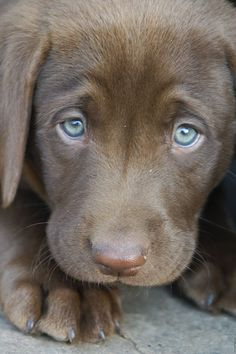 Blue puppy eyes