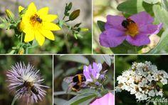 Autóctonas en el jardín: Da vida a tu jardín, da vida a las abejas
