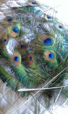 Peacock Feathers Medium 1.52.5inch wide all by CherylsGoodStuff, $4.20