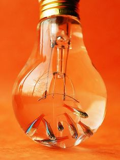 Orange light bulb with fish in it