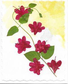Real Pressed Flower Greeting Card Birthday Card by SmileWithFlower