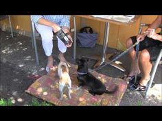 Episode Training Tip Outside Dining with your Dog Etiquette & Manners Dining Etiquette, Etiquette And Manners, Training Tips, Your Dog, The Outsiders, Landscaping, Gardening, Puppies, Entertaining