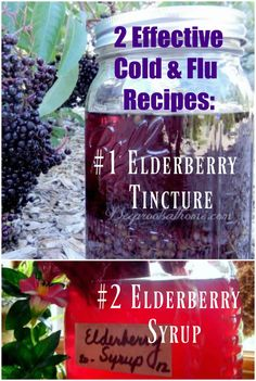 Cold & Flu Syrup and Tincture: My Tried & True Recipes Elderberry Cold & Flu Syrup and Tincture Recipe. Make it yourself with ease! Elderberry Cold & Flu Syrup and Tincture Recipe. Make it yourself with ease! Holistic Remedies, Natural Health Remedies, Herbal Remedies, Cold Remedies, Natural Medicine, Herbal Medicine, Holistic Medicine, Cough Syrup, Kids Health