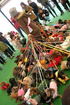 Heaven or Hell?: I love dachshunds, so this job looks like it might be fun--for maybe two minutes! Source