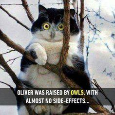 Does it call Owliver?  Follow @9gag for more cute cats.  #9gag  #cat #owl #creepy
