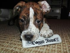 """Nero catching up on the latest gossip in """"Doggy News."""""""