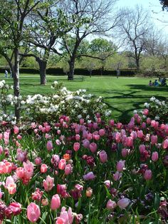 Dallas Arboretum and Botanical Garden. Dallas, Texas.  Find Super Cheap International Flights to Paris, France ✈✈✈ https://thedecisionmoment.com/cheap-flights-to-europe-france-paris/