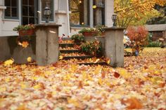 leaves everywhere. chestnut mocha.