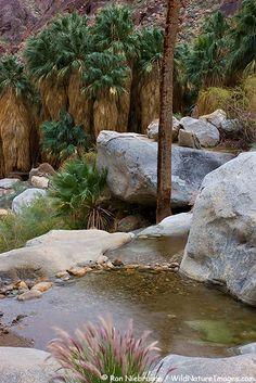 First Palm Oasis, Borrego Palm Canyon, Anza-Borrego Desert State Park, California.  by Ron Niebrugge