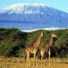 Mt Kilimanjaro, Tanzania  Destination: the World  (Next time we go to Africa...oh how I hope there is a next time!)